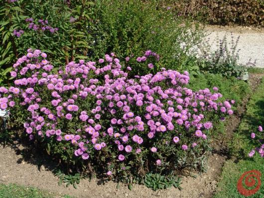 Continuiamo con le cure autunnali da dedicare alle nostre piante perenni.