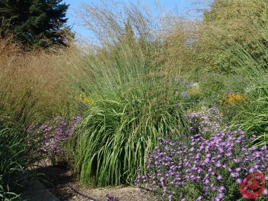 Le graminacee sono molto decorative anche d'inverno, perciò rinviamo la loro potatura alla primavera!