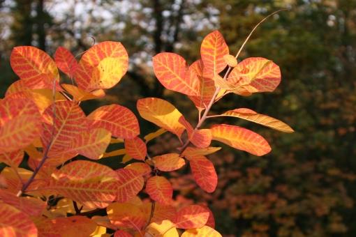 Ruj in slikovitost jeseni