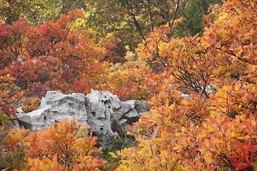 I colori dell'autunno e la landa carsica