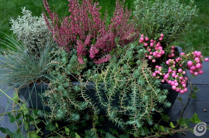 Best piante da terrazzo perenni pictures amazing design ideas 2018