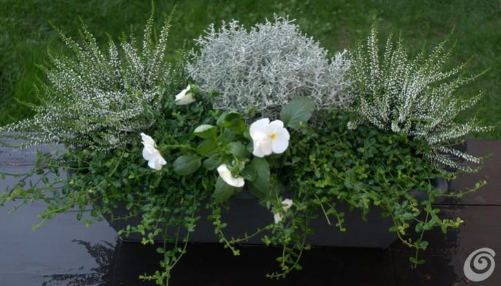 le fioriere invernali per il balcone e il davanzale casa