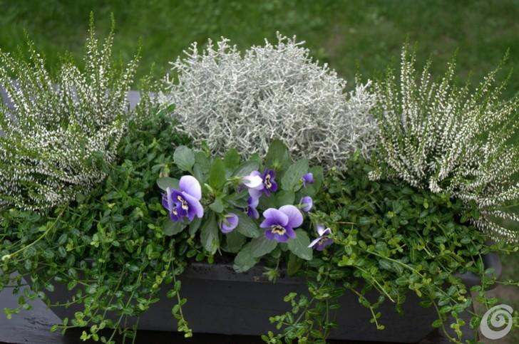 Composizioni fioriere da esterno js04 pineglen for Piante invernali da esterno