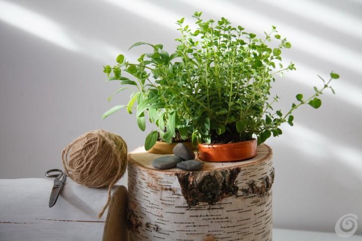 Le piante aromatiche sempre a portata di mano casa e trend - Erbe aromatiche in casa ...
