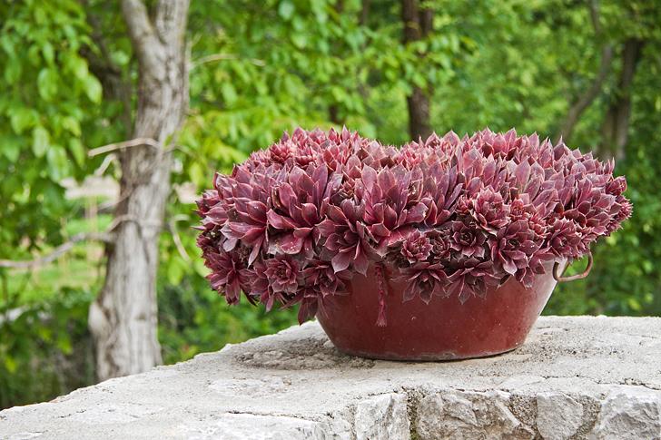 Il giardino delle rose di britta casa e trend for Piante ornamentali da vaso per esterno