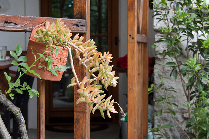 piante grasse succulenta garden