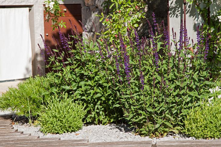 giardino_roccioso_rock_garden_mediterranean