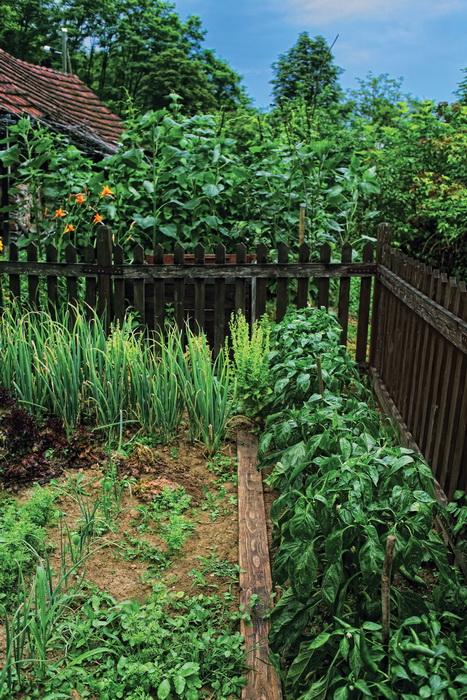 organski-vrt