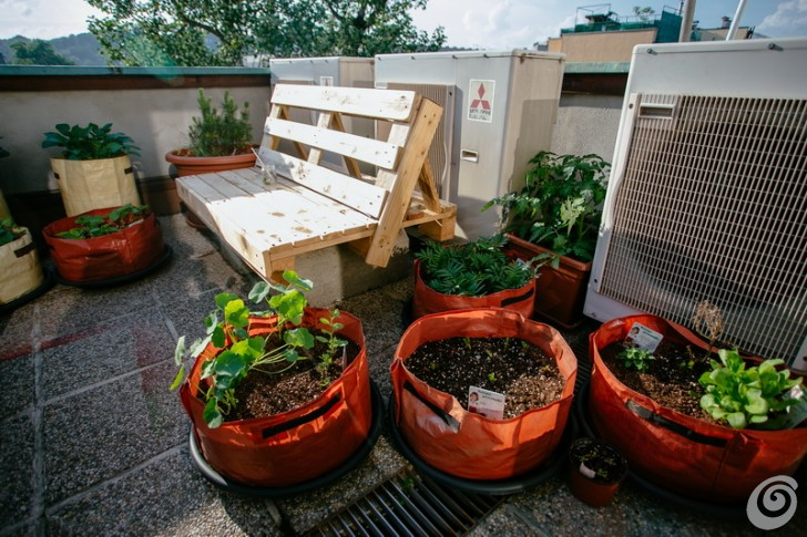 vrt_na_subicevi_zelenjavni_solski_vrt_urban_school_garden