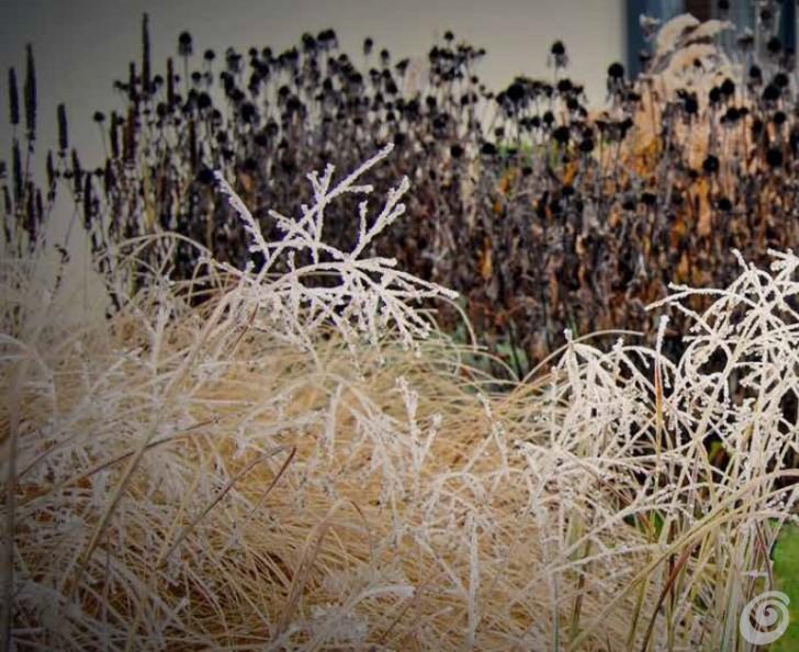 graminacee-inverno-giardino