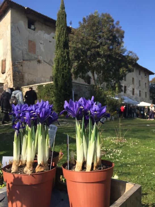 strassoldo-sejem-razstava-roze-vrt-obrtniki-vrtnarjenje