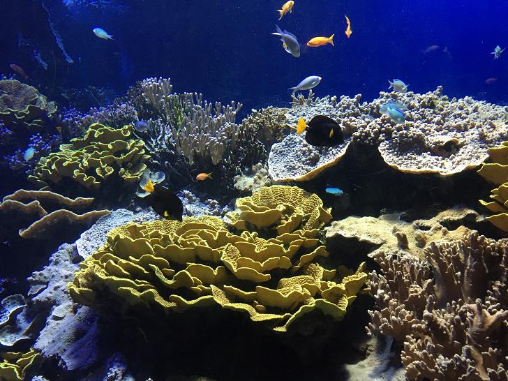 piante-per-acquario-vive-o-finte